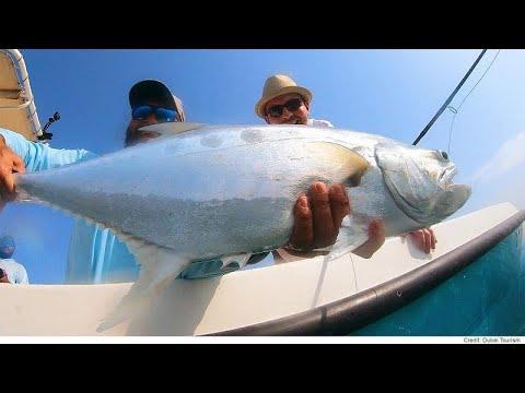 شاهد مغامرة شيقة في البحر لاصطياد سمكة فريدة في دبي